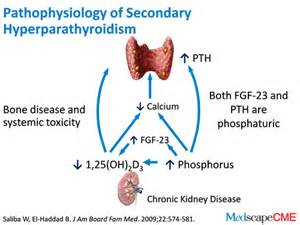 hperparathyroid picture 2