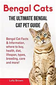 bengal cats information on diet picture 1