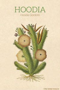 hoodia what in it picture 1