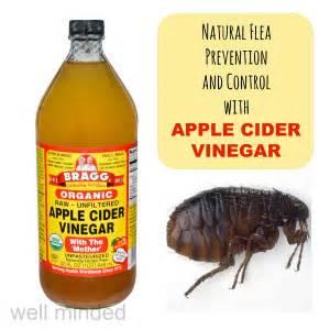Herbal flea remedies picture 11