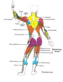 low back muscle charts psoasis picture 14