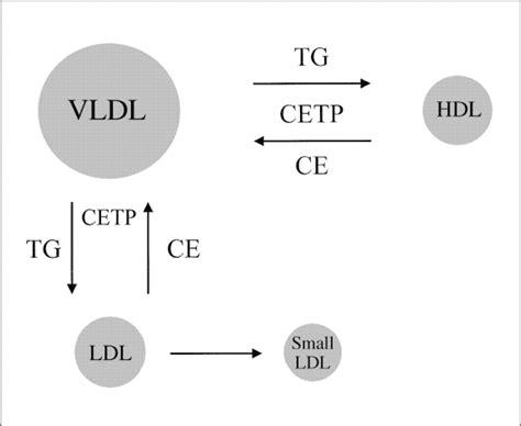 cholestrol picture 3