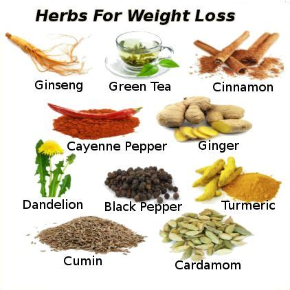 fat burning herbs picture 3