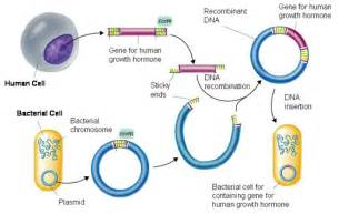 human growth hormone biology picture 3