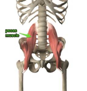 low back muscle psoais picture 13