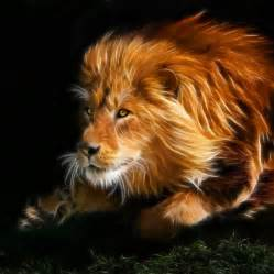 graphic lion sleeping picture 2