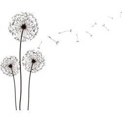 a dandelion picture 11