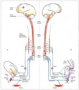 quadriplegic erection picture 3