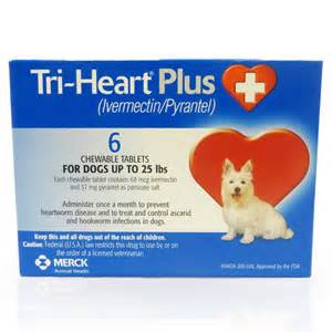 probiotics for dogs picture 5