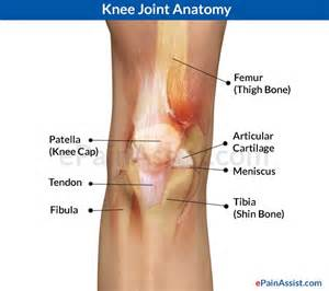 picture knee joint picture 6