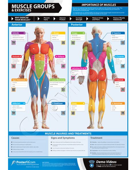 muscle groups picture 1