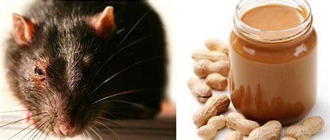peanut er rat hair picture 2