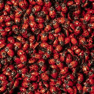 deadly bugs in a ladys breast picture 13