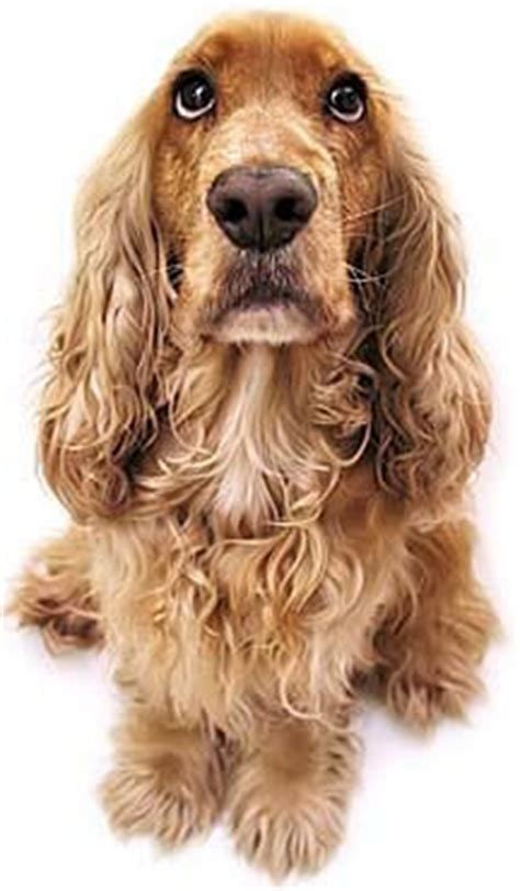 aging canine concerns picture 14