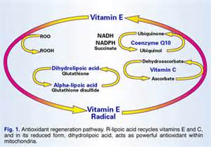 alpha lipoic acid antioxidant picture 15