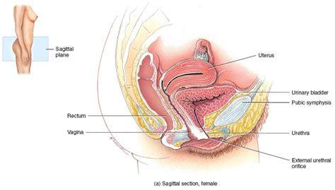 urethra insertion with long fingernails picture 15