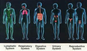 pheromones endocrine system picture 9