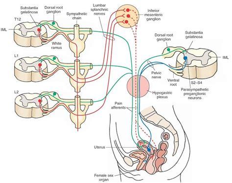 penis in vagina diagram picture 7
