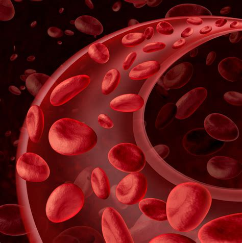 circulation of red blood cell picture 1
