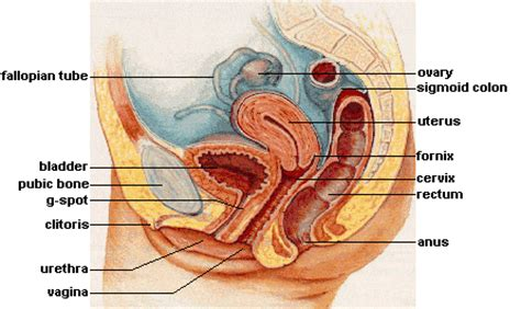 how to reduce swelling of swollen urethra from picture 3