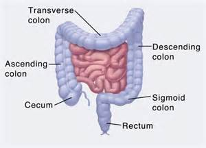 colon and system picture 9
