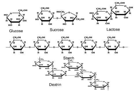 chemical structure of starch picture 13