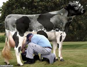 women milking men picture 7