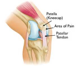 inner knee joint tendon injury picture 3