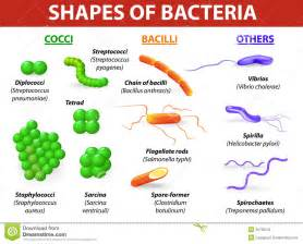 bacterial infections specified as groups picture 7