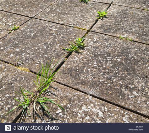 stop weeds growing between pavers picture 18