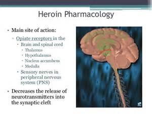 medicine that resets brain receptors picture 13