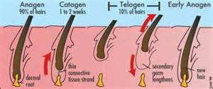 dallas tx male genital electrolysis picture 13