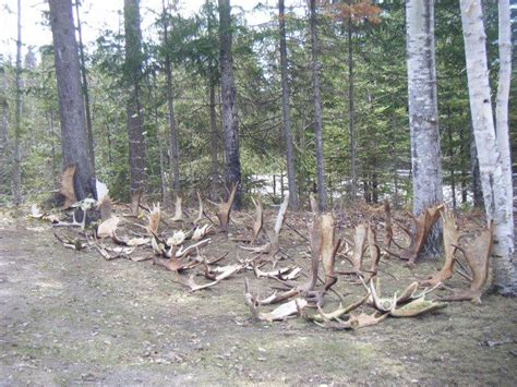antler test picture 1