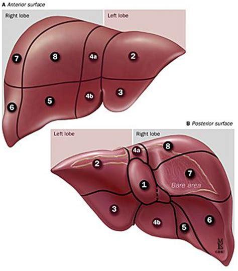 liver ailments symptoms picture 11