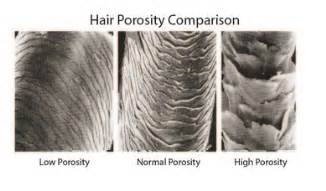 Prosity of hair picture 3