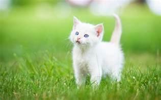 cat h whitener picture 7