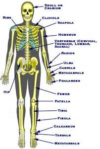 descriptive muscle terminology picture 13