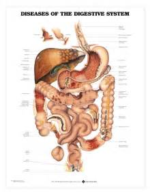 diseases of gastrointestinal tract picture 3