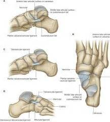 subtalar joint picture 5
