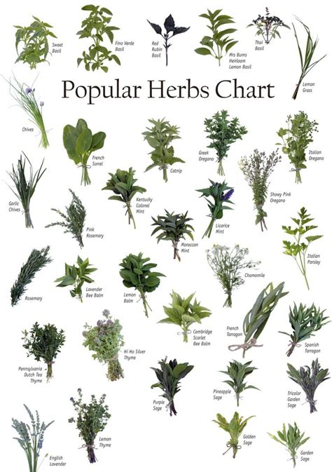 Best hot herbal herbs picture 9