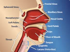 pain in jaw h neck throat and head picture 6