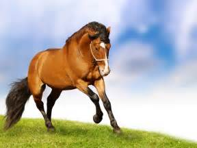 Herbal equine picture 18