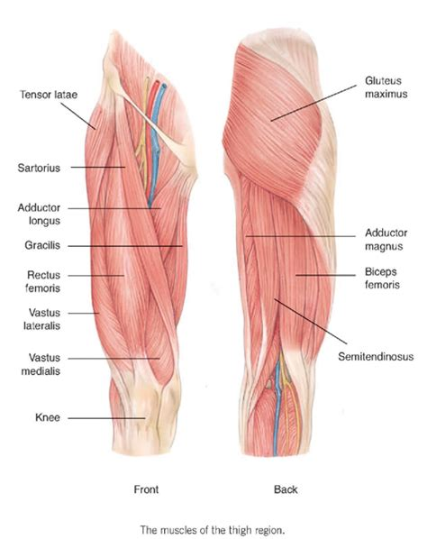 cause of muscle pain in thighs picture 1