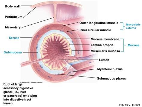anatomy colon picture 2