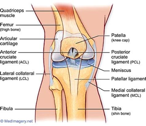 diagram of knee joint picture 15