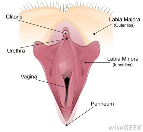abnormalities between vagina and bladder picture 5