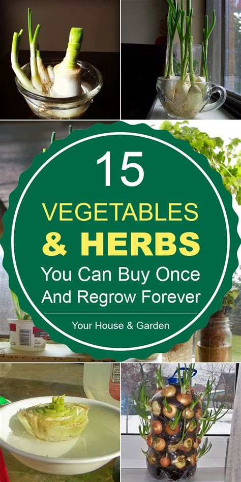 where can you buy herbal medicines picture 4