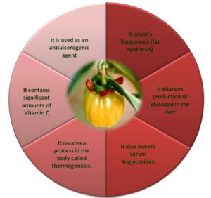 garcinia cambogia benefits side effects picture 3