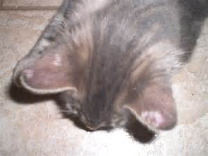 cat health dry skin picture 19