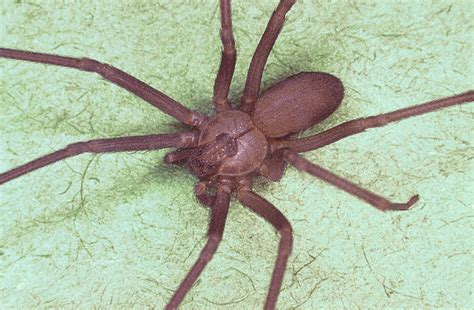 girl from africa dies from spider bite after picture 5